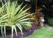 Kwikfynd Tropical Landscaping backplains